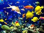 Import morských živočíchov Indonézia,Filipíny,sklad 14.2.2019